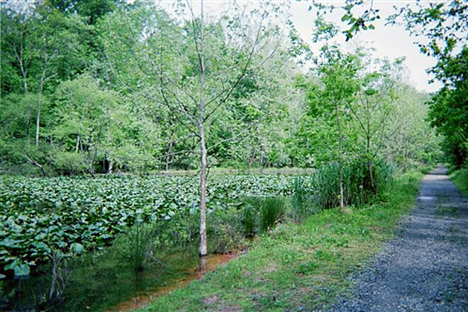 Pomeroy and Newark Rail Trail Pomeroy Trail Another view of the lily-choked pond