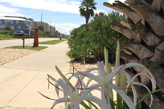 Ponce Inlet Trail Ponce Inlet Trail