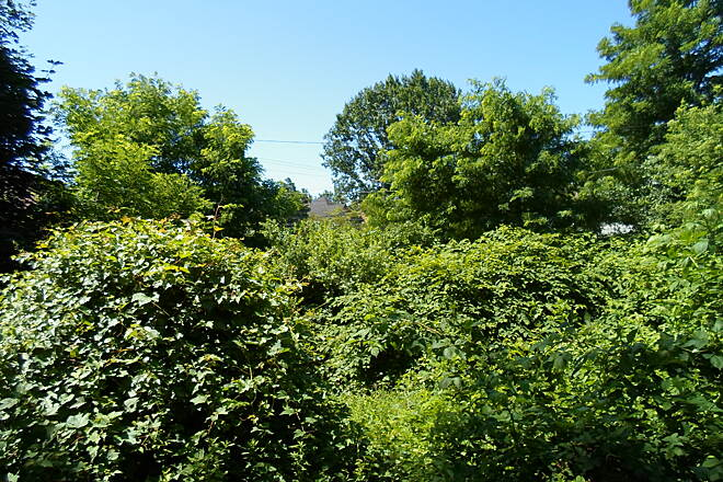 Radnor Trail Radnor Trail Lush vegetation visible from the trail in summer, Chanticleer Gardens is nearby. Taken July 2014.