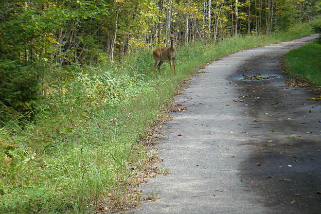 Rainy Lake Trail I mile West of National Park Lodge Hqs. Three Deer