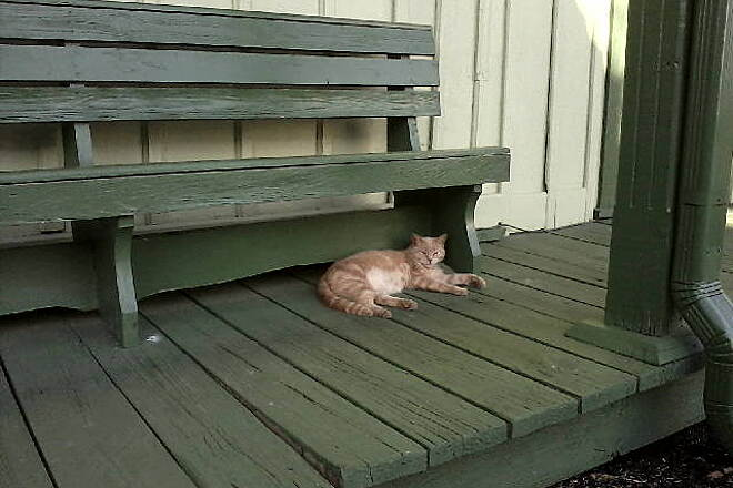 Richard Martin Trail Cat snoozing at Elkmont depot