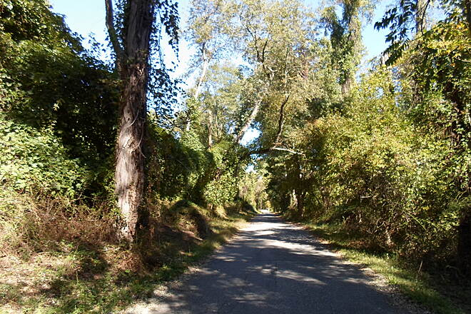 Ridley Creek State Park Trail Ridley Creek State Park Trail Trees branch across the Forge Road segment of the trail.