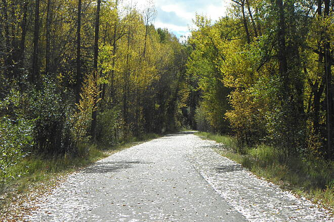 Rio Grande Trail Trail surface near Aspen Asphalt in good condition with a narrow strip of crushed stone, naturally decorated with fallen leaves in late September.