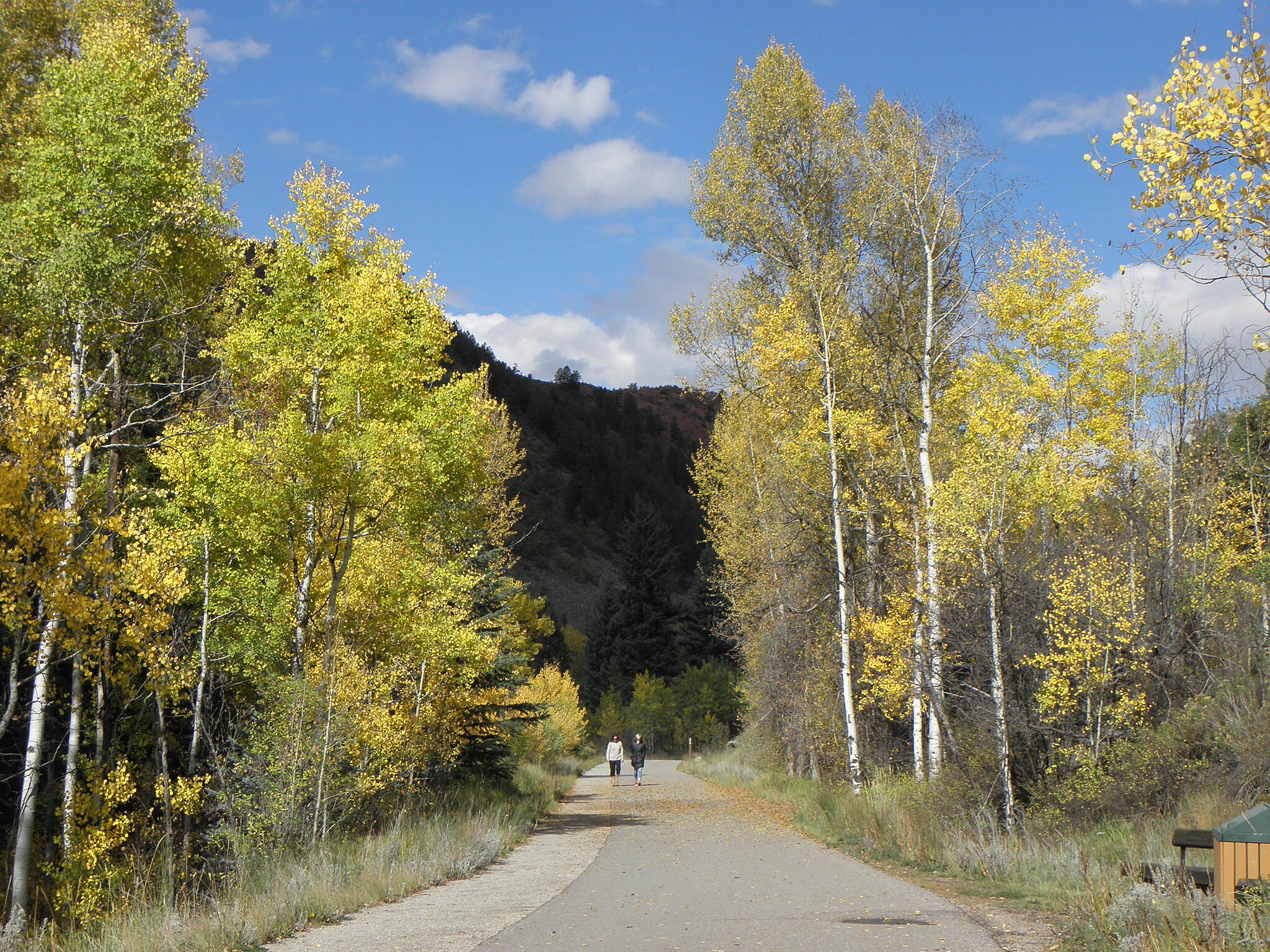 Rio Grande Trail Fall colors near Aspen Aspen trees 'blooming' in late September.