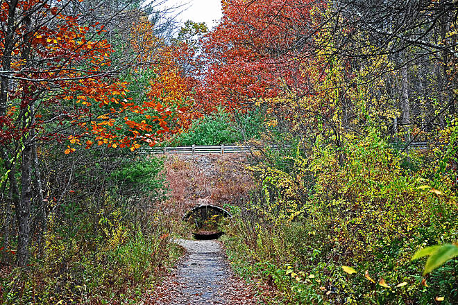 Rockingham Recreational Rail Trail (Portsmouth Branch) First Tunnel The last vestiges of fall could be seen on the trail by Lake Massabesic.