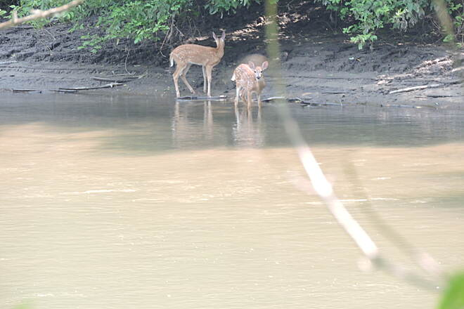 Root River State Trail Doe and fawn Taken just a few miles out of Rushford.