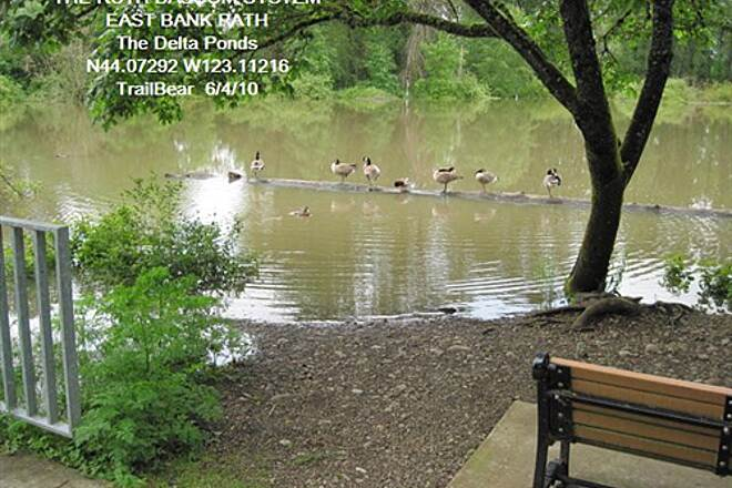 Ruth Bascom Riverbank Trail System RBRPS: EAST BANK & NORTH BANK PATHS Geese in the Delta Pond