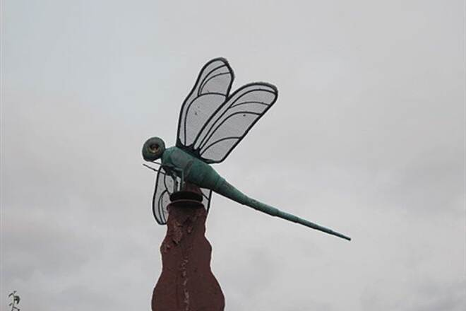 Sammamish River Trail SAMMAMISH RIVER TRAIL Rather charming dragonfly