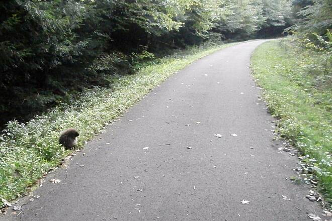 Sandy Creek Trail Groundhog Groundhog