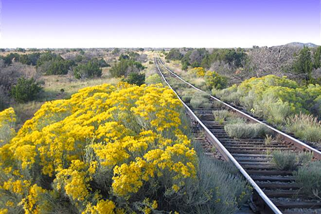 Santa Fe Rail-Trail Santa Fe Rail Trail Late summer blooming chamisa