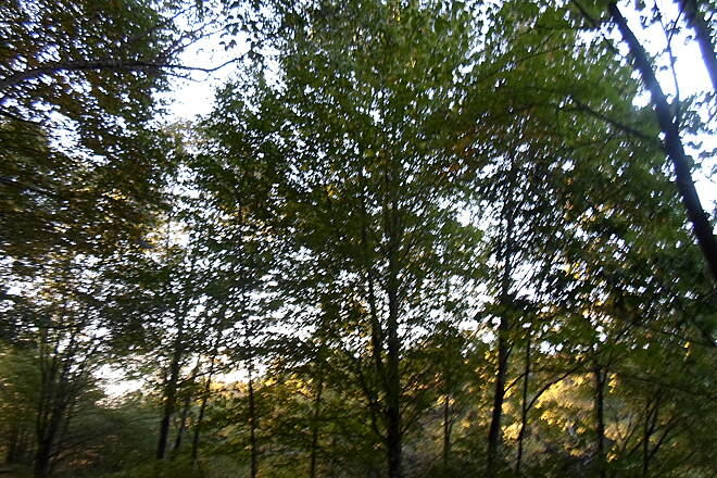 Schuylkill River Trail Bartram Trail Forest near dusk, taken outside Port Clinton in Sept. 2015.