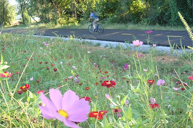 Scull Creek Trail Scull Creek Trail Wildflowers planted along Scull Creek Trail, between North Street and Sycamore Street