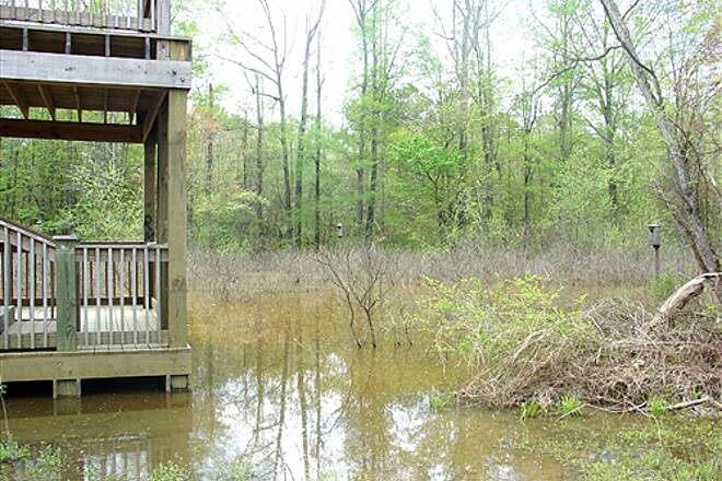 Silver Comet Trail White Horse Trail Tower over looking swamp Look for bird boxes