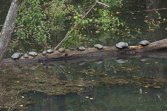 Silver Comet Trail Turtles on a log Turtles on a log at about mile marker 53.8 west of Cedar Town