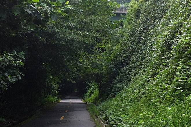 Silver Comet Trail Tunnel of trees How peaceful is this? It was quiet and cool, it was like I was elsewhere in a jungle.