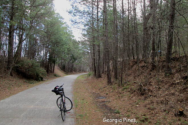Silver Comet Trail Georgia Pines on the SCT