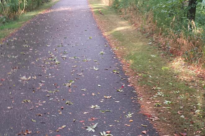 Sippo Valley Trail By Blossom Road  Leaves fell from the heavy rain. It's August, but looks like early October.