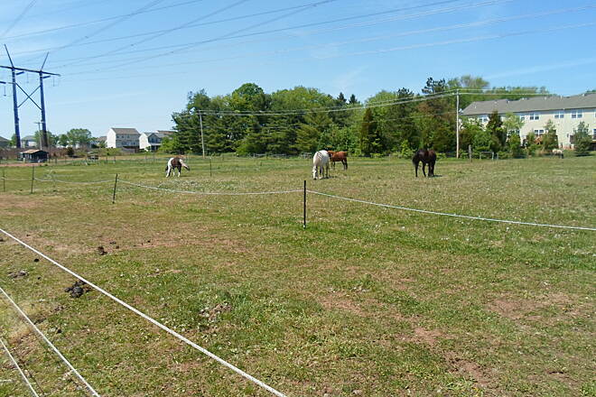 Skippack Trail Skippack Trail Horses grazing among powerlines.