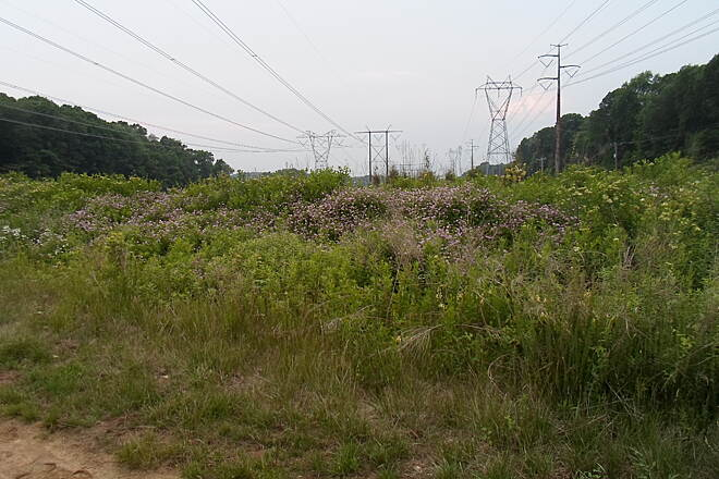 Skippack Trail Skippack Trail After an unusually dry May, June rains brought out the wildflowers and other plants in the meadows near Evansburg Road. Taken June 2015.