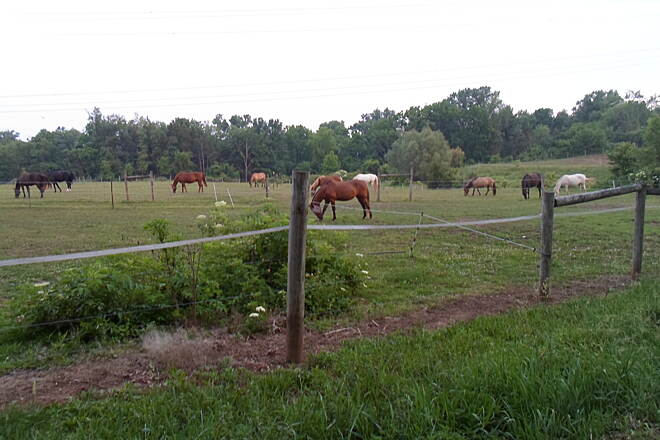 Skippack Trail Skippack Trail Horses enjoying an evening graze in the Fun E. Farm pastures off the trail near Collegeville Road. Taken June 2015.