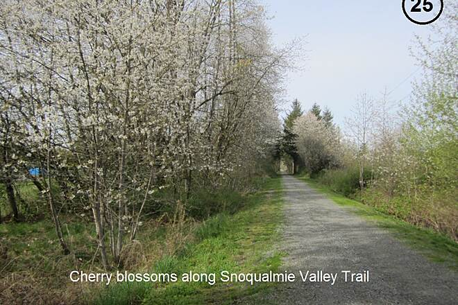 Snoqualmie Valley Trail Snoqualmie Valley Trail Snoqualmie Valley Trail is basically an all-season trail, but the best time to enjoy it is in the spring when the wild cherry trees are in bloom.