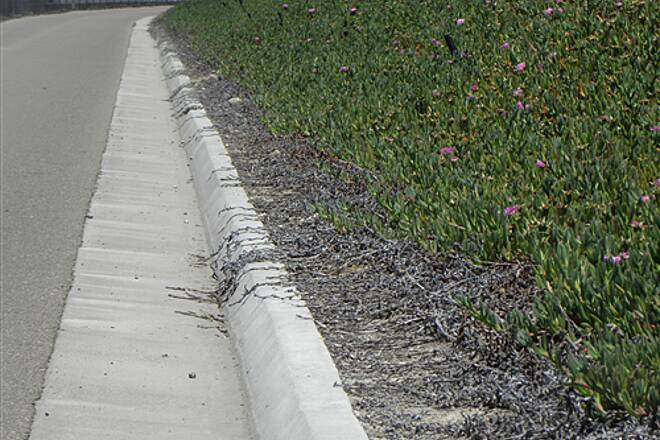 State Route 56 Bike Path  Herbicide sprayed on the ice plant keeps it from growing over the trail.