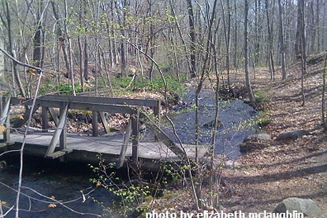 Sussex Branch Trail Bridge at Spring Time! A beautifully maintained bridge that crosses over one of the many brooks.