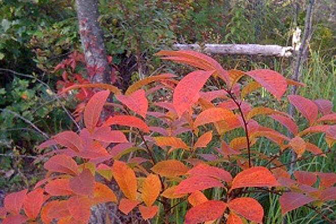 Sussex Branch Trail Autumn Arrival This years launch of color!