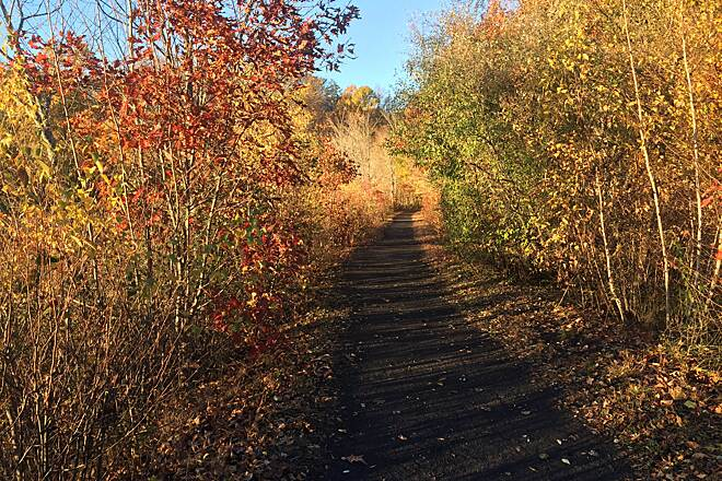 Sussex Branch Trail Trail in Autumn Near Whites Pond, Kittatinny Valley State Park