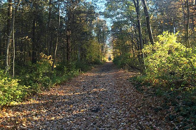 Sussex Branch Trail Autumn on the.Trail Andover Twp north of Kittatinny Valley State Park