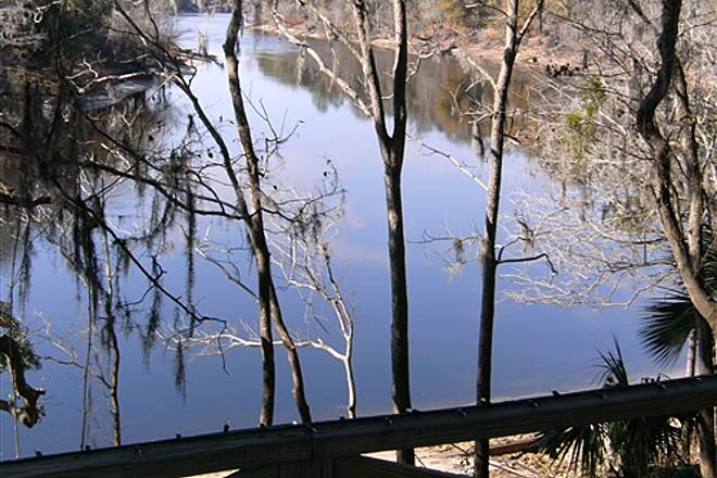 Suwannee River Greenway at Branford The Suwannee River from Branford Shrine Club alone Trail