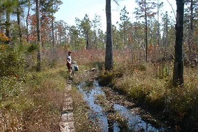 Swamp Fox Passage (Palmetto Trail) Water on the Trail In 1999 the trail had some wet spots. We loved the trail but had to refigure our daily mileage goals.