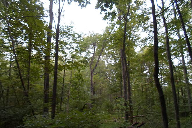 Swatara Rail-Trail Swatara Rail-Trail Late summer forests off the trail north of Monroe Valley Road. Taken Sept. 2015.