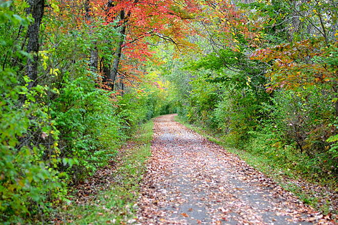 T. J. Evans Panhandle Trail Foliage on the TJ Evans Trail Taken Saturday 10/2013