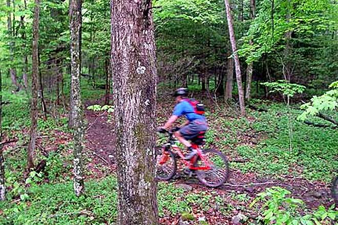 Tea Creek Trails Forest + Trails + Roots = Nice Ride! Christopher Burk riding through the forest at the Gauley Mountain Base Trails.