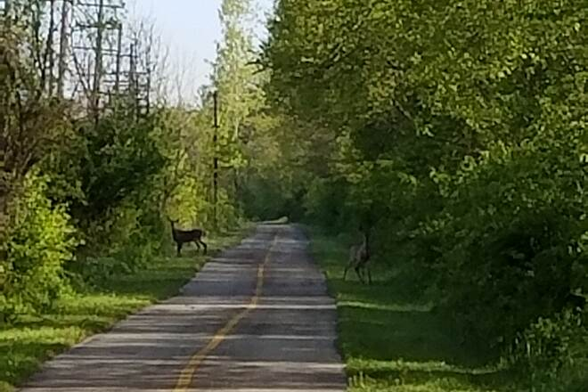 Thorn Creek Trail Deer are out Nice serene tranquil path