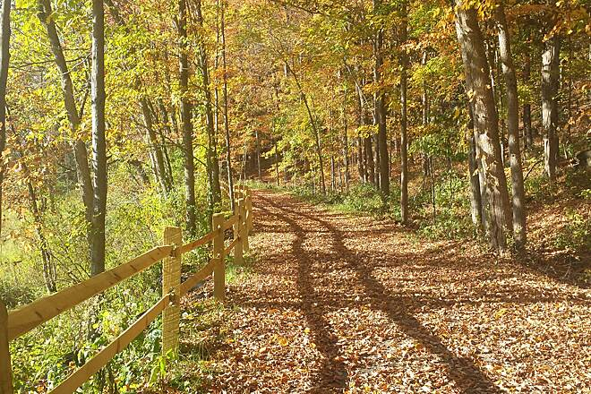 Trolley Trail (PA) Filtered Sun on the Trail