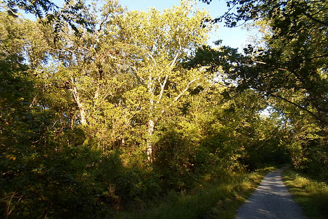 Union Canal Trail Union Canal Trail Early evening sun in early autumn. Taken Sept. 2014.