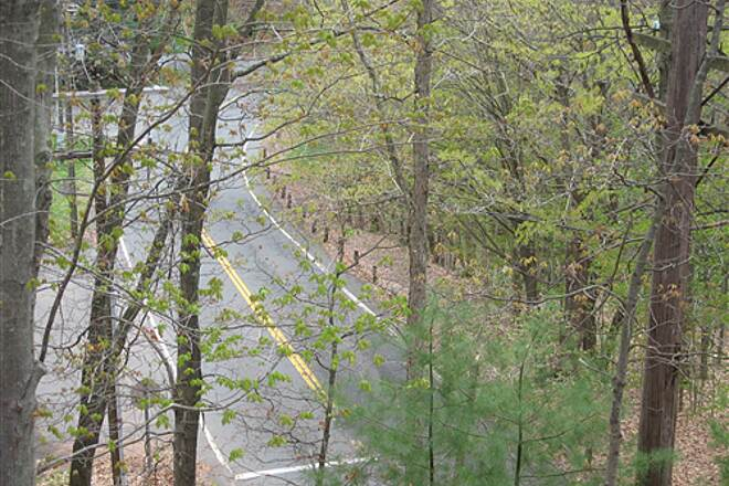 Vernon Rails-to-Trails (Hop River State Park Rockville Spur) Vernon Rail Trail View from trail to Tunnel Rd. below