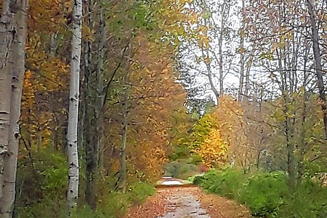Wadhams to Avoca Trail My 19 mile bike ride  It's so serene and beautiful.  Great for biking. Love it in the fall.