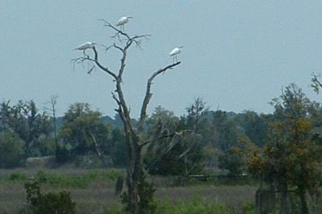 West Ashley Greenway Egrets Eventually the trail enters an estuary where we saw a great variey of shore birds.