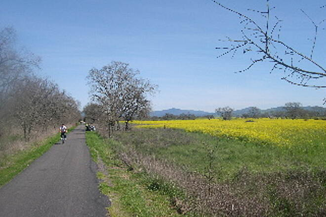 West County Regional Trail Mustard in bloom Mustard in bloom along the trail near Sebastopol.
