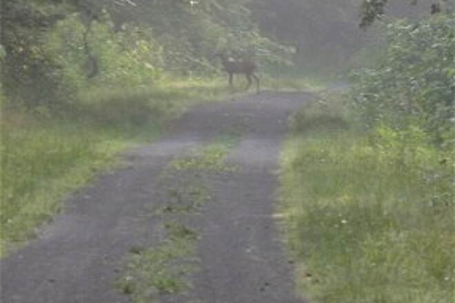 West Penn Trail Sharing the trail with white tailed deer. Photo taken June 20, 2012