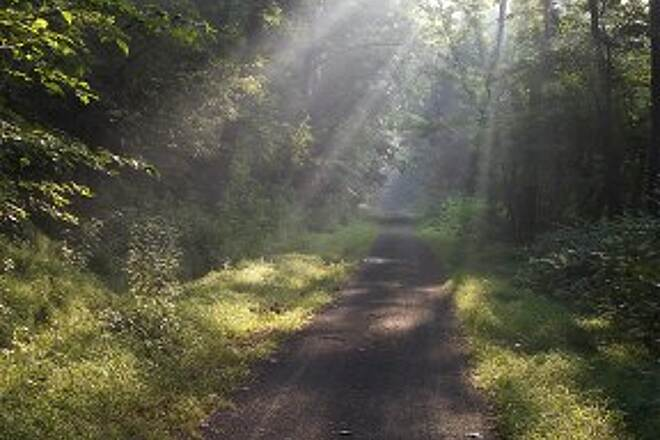 West Penn Trail Early sun rays. Photo taken June 20, 2012