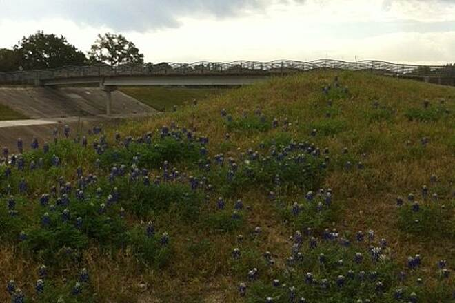 West White Oak Bayou Trail Texas Bluebonnets Along the Trail Taken 03/30/13