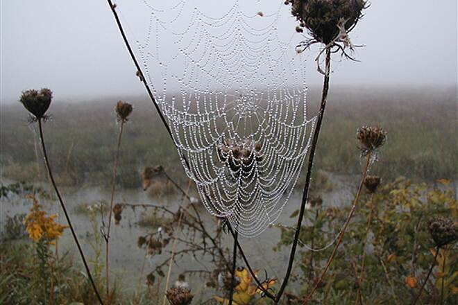 Western Reserve Greenway Greenway Trail in October Foggy web in wildlife preserve