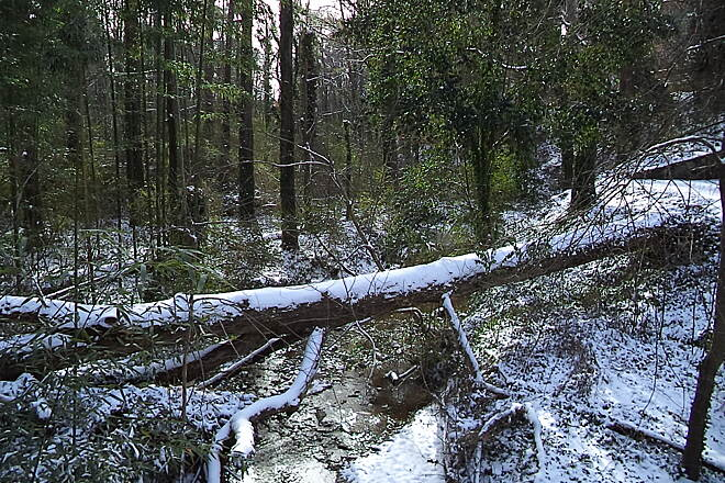 Whetstone Creek Trail Creek Snow on a fallen tree across Whetstone Creek
