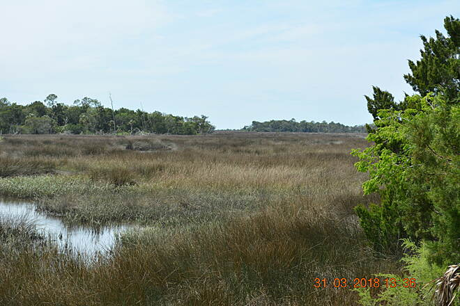 Withlacoochee Bay Trail Low Country Here is another shot of the low country that you will see.