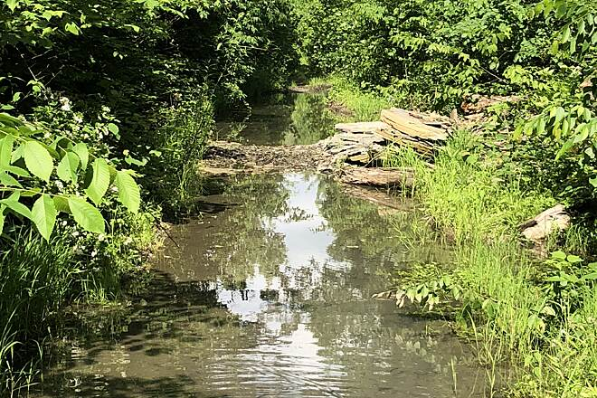 Zoar Valley Trail Standing Water on the Trail A view of the water covering the old railroad right of way portion of the Zoar Valley Trail near Camp Tuscazoar and Dover Dam.